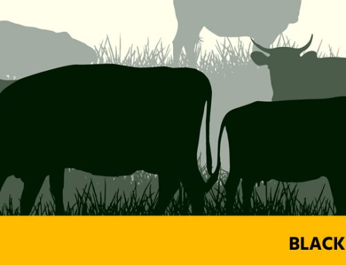 Black Disease – Preventable Diseases of Cattle