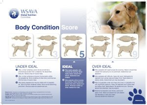 Body Condition Chart for dogs
