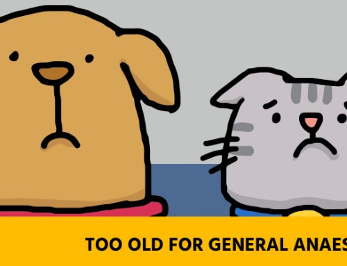 Is general anaesthesia safe for your older pet?