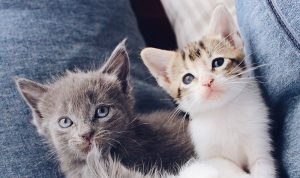 Dr Tish discusses 4 things you should know before bringing home a new kitten